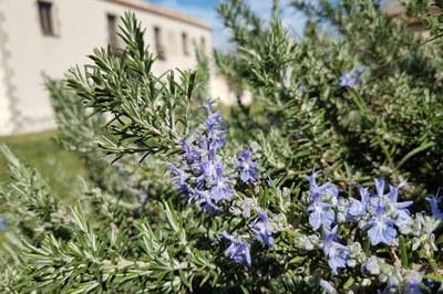 Remeis casolans amb herbes: fem sabó