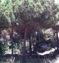 Prohibit encendre foc als terrenys forestals fins al 15 d'octubre