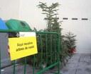 Mataró habilita 32 punts de recollida d'arbres de Nadal a partir de dilluns 11 de gener