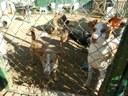 L'Ajuntament comença les obres de millora i adequació de Cal Pilé com a Centre d'Acollida d'Animals Domèstics