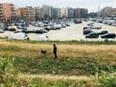 La segona fase de les obres de millora de l'estacionament del Triangle Molins començarà a la primavera