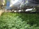 Quatre detinguts en el desmantellament a Mataró de dues plantacions indoor amb més de 4.000 plantes de marihuana