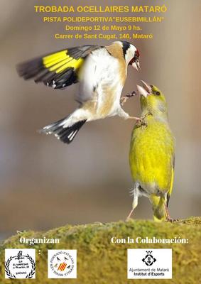 Concurs d'Ocells Silvestres