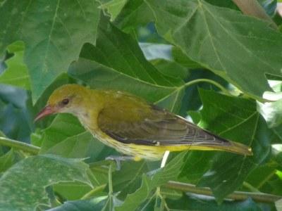 Xerrada participativa: Ocells que van i venen