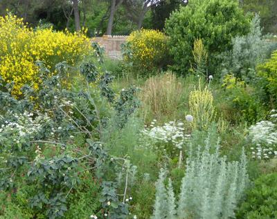 Taller: L'ús d'extractes vegetals a l'hort i al ...